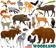 Set of cute woodlands animals Stock Photography