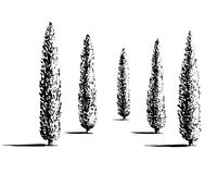 Set of cypresses illustration. Set of Mediterranian, Italian or Tuscan cypresses illustration. Valley of trees of different sizes. Black sihlouette of coniferous Royalty Free Stock Photo