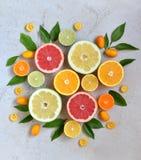 Set cytrus na lekkim tle: pomarańcze, mandarynka, cytryna, grapefruitowa, wapno, kumquat, tangerine Świeże organicznie soczyste o fotografia royalty free