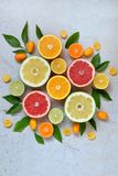 Set cytrus na lekkim tle: pomarańcze, mandarynka, cytryna, grapefruitowa, wapno, kumquat, tangerine Świeże organicznie soczyste o obraz stock