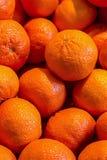 Set cytrus pomarańczowych mandarynek zbliżenia owoc bazy pionowo deseniowy źródło witaminy zdjęcie royalty free