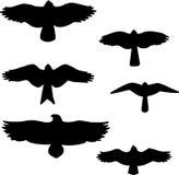 Set czarne odosobnione sylwetki ptaki Fotografia Royalty Free