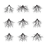 Set Czarni korzenie również zwrócić corel ilustracji wektora Obrazy Stock