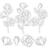 Set czarny i biały ilustracje z kwiatonośnymi magnoliowymi gałąź Odosobneni wektorów przedmioty royalty ilustracja