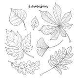 Set czarny i biały jesieni spada liście Zdjęcia Royalty Free