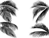 Set czarny i biały tropikalni palma liście Odizolowywaj?cy na bia?ej t?o ilustraci ilustracji