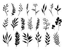 Set czerni ziele i gałąź Zdjęcie Royalty Free