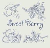 Set czernica, truskawka, czarna jagoda, wiśnia Obraz Royalty Free