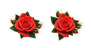 Set czerwieni róży kwiatów przygotowania Obrazy Stock