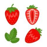Set czerwoni truskawkowi berryes cali, połówki i liścia wektoru illust Obraz Royalty Free