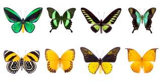 Set cztery kolorowy i piękni motyle obraz royalty free