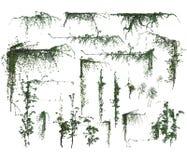 Set of 3d vine corners royalty free illustration