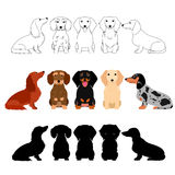 Set of Dachshund group. Line art, with colors, silhouette royalty free illustration
