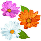 Set of Daisies Royalty Free Stock Photography