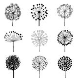 Set of Dandalions Stock Photography
