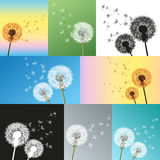 Set of dandelions blowing seeds Royalty Free Stock Photo
