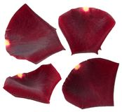 Set of dark red rose petals isolated on white stock photography