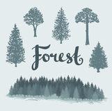 Set of the deciduous and the coniferous isolated hand drawn trees. Landscape of a coniferous forest. Vector Forest background vector illustration