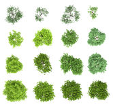 Set of deciduous trees. View from above, for the environment royalty free stock image