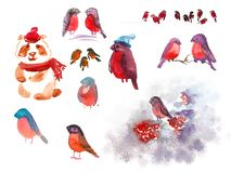 Set of decor elements for greeting card. Watercolor bullfinches and bear in winter clothes stock illustration