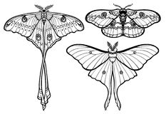 Set of decorative butterflies. Monochrome drawing isolated. Vector illustration. Print, posters, t-shirt, textiles