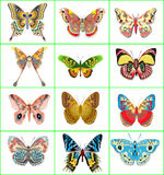 Set of decorative butterflies on a white backgroun Stock Images