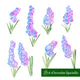 Set of decorative color elements, hyacinth and leaves Stock Photography