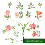 Set of decorative color elements, roses and leaves Royalty Free Stock Images