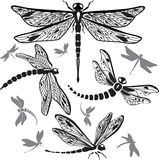 Set of decorative dragonflies Stock Images