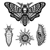 Set of decorative elements: moth Dead head, doll, larva, radiolaria. Linear drawing isolated on a white background. Vector illustration. Print, posters, t Stock Photo