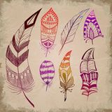 Set of decorative feathers. Set of decorative colorful feathers Stock Photos