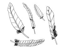 Set of decortive feathers. Doodles. stock illustration