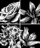 Set of decorative floral background, hand drawing. Royalty Free Stock Photo