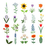 Set of Decorative Flowers Royalty Free Stock Images