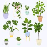 Set of decorative house plants. Flowerpot isolated objects, hous stock image