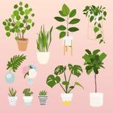 Set of decorative house plants. Flowerpot  objects, hous Stock Photos