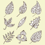 Set of 9 decorative leaves Stock Photos