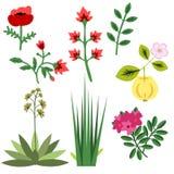 Set of decorative plants Stock Images