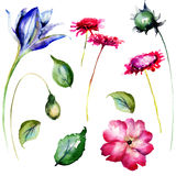 Set of decorative wild flowers Stock Photos