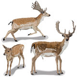 Set of Deers Stock Images