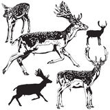 Set of deers Royalty Free Stock Images