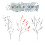 Set of delicate vector watercolor flowers Royalty Free Stock Photos