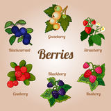 Set of delicious berries of various kinds Royalty Free Stock Photo