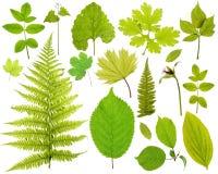 Set der Blätter Stockbild