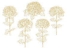 Set der ein-farbigen umrissenen Chrysantheme Stockfotos