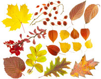 Set of design elements on a theme of autumn. Stock Image