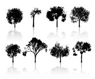Set of detailed trees Royalty Free Stock Images