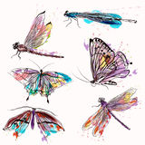 Set of detailed vector butterflies for design Stock Photos