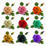 Set diferent flowers roses. red black white gold. Royalty Free Stock Images