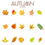 Set Of Different Abstract Autumn Leaves Stock Photo